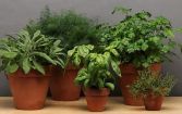 Live Plant varr. potted plants