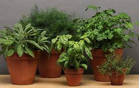 Live Plant varr. potted plants