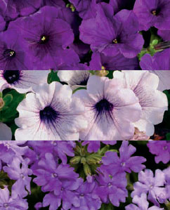 "Lively in Lavender combination Available as 6.5"" Foolproof color pot only"