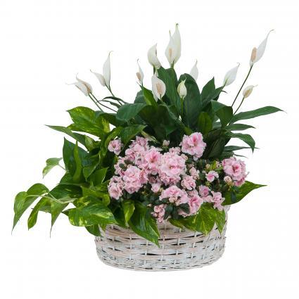 Living Blooming  White Garden Basket  Arrangement