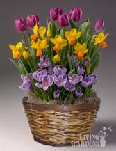 Living garden  Spring plant basket