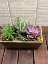 Living Green Succulents Wooden Garden