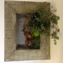 Living Picture Frames Live plants