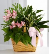 Living Spirit Basket Arrangement Any Color Combination Can Be Made