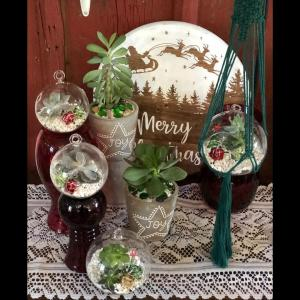 Living Succulent Ornament Plant in Mazomanie, WI | B-STYLE FLORAL AND GIFTS
