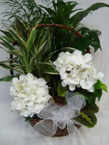 Large Planter shown with 2 White Silk Hydrangea's and bow. (Call if you would rather have cut flowers instead of silk) Same price.