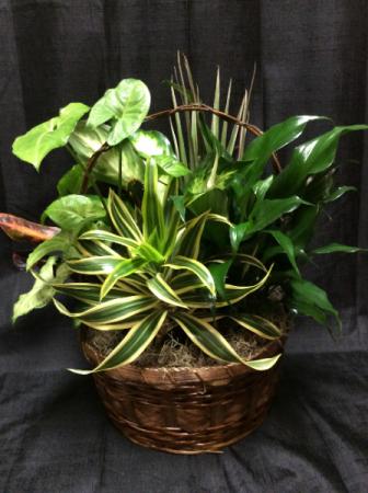 Locally designed Dishgarden Planter