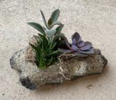 Log succulent planter  Please call to order - In town delivery only