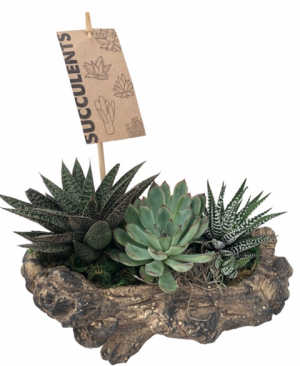 Log Succulent  Succulent in Newmarket, ON | FLOWERS 'N THINGS FLOWER & GIFT SHOP