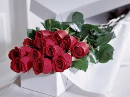 Long Stem Roses in Gift Box Boxed Roses