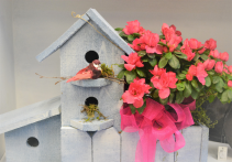 Love Birds Flowering Planter