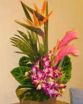 "Love in the Tropics ""Lavish Collection Must be ordered 3 days in advance"" Tropical Arrangement"