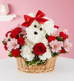 Love Pup  179409  in Beaufort, SC | Smiling Petals Flower Shop