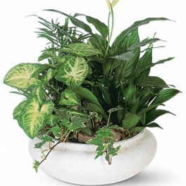 Lovely Ceramic Dish Garden Multi lush house plants! VERY POPULAR!! THREE SIZES DRESSED UP WITH RIBBON, TWIGS & A BIRD!!