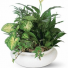 Lovely Ceramic Dish Garden- Dressed up beautifully Multi lush house plants! VERY POPULAR!!