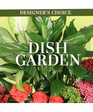 Lovely Dish Garden Designer's Choice in Port Stanley, ON | FLOWERS BY ROSITA