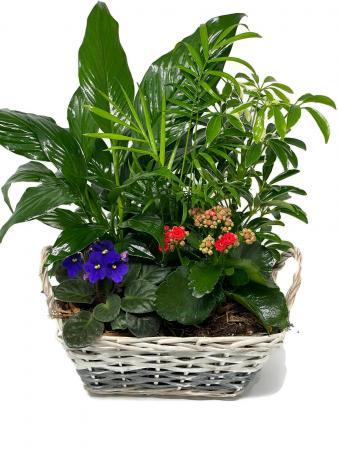 Planter Basket T-4 Planter Garden