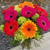 lovely gerbera daisies