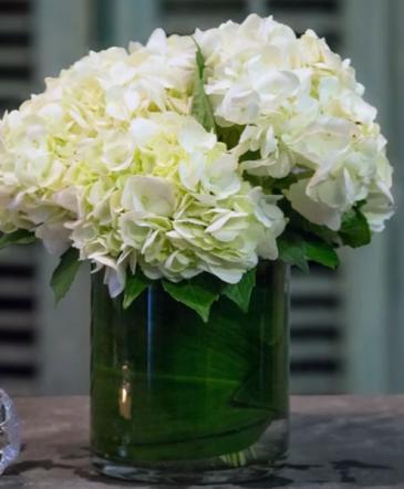 Lovely Hydrangea's  Vase