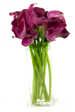 Lovely Calla Lilies