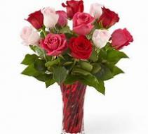 Lovely Lady Roses