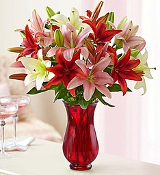 lovely lillies  lilies