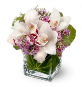 Lovely Orchids  Small Cube vase