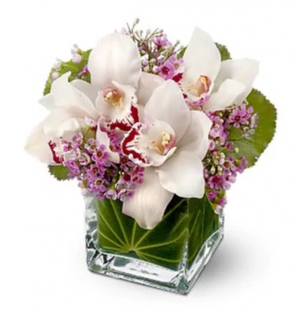 Lovely Orchids  Cube vase