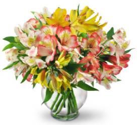 Lovely Peruvian Lilies