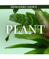 Lovely Plant Designer's Choice