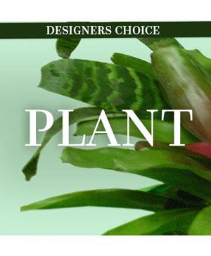 Lovely Plant Designer's Choice in Plum, PA | FOREVER GREENE FLOWERS INC.
