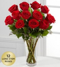 Lovely Red Red Roses