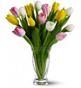 Lovely Tulip Mix