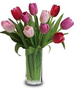 Lovely Tulips vased