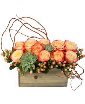 Lover's Sunrise Modern Arrangement in Arlington, TX | Lige Green Flowers