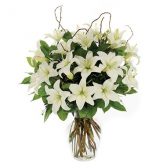 Loving Lilies-White Sympathy Arrangement
