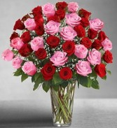 Loving Passion Red and Pink Premium Roses Entwined