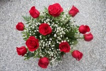 12 Premium Long Stem Red Roses  wrapped with babies breath