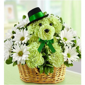 Luck-Of the Irish Puppy Basket Arrangement in Picayune, MS | West Canal Floral Shoppe