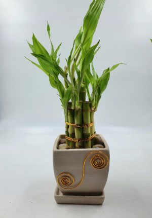 Lucky Bamboo 2 Tiered Tower  Best Seller  in Sunrise, FL | FLORIST24HRS.COM