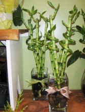 Lucky Bamboo arrangement
