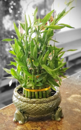 Lucky Bamboo LG Frog Tower