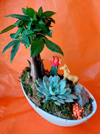 Lucky Dish Garden  Dish garden with cacti and more