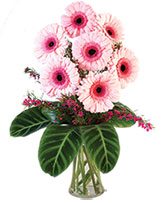 Lucky Seven Gerberas Floral Design