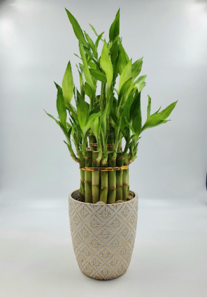 LuckyBamboo Tower 3-Tiered  Best Seller  in Sunrise, FL | FLORIST24HRS.COM