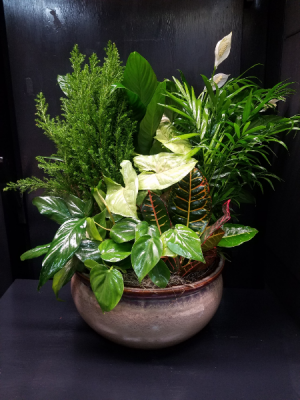 Luscious Ceramic Dish Garden Plants in Lauderhill, FL | BLOSSOM STREET FLORIST