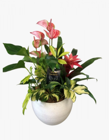 Lush anthurium planter  Dish garden