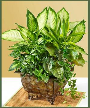 Lush Dish Garden A Customer Favorite! in Arlington, TX | Erinn's Creations Florist