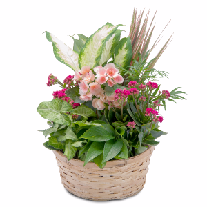 Lush Dish Garden Basket in Swannanoa, NC | The Asheville Florist