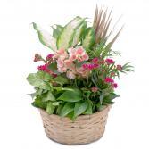 Lush Dish Garden Plant Arrangement
